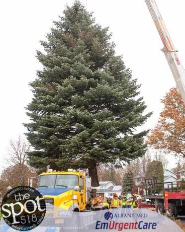 tree-6183