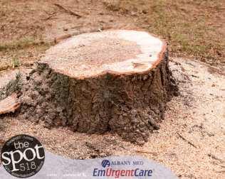 tree-6232