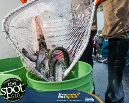 fish-0398