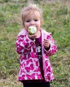 apples web-4868
