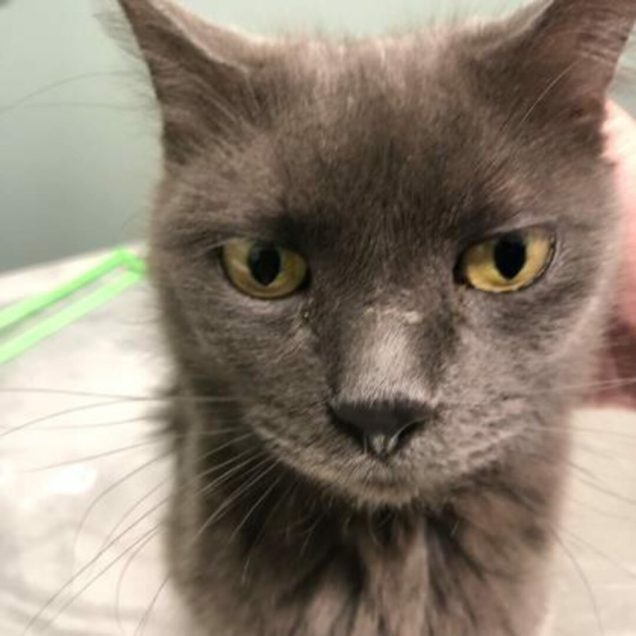 Claudia is a 3-year-old female