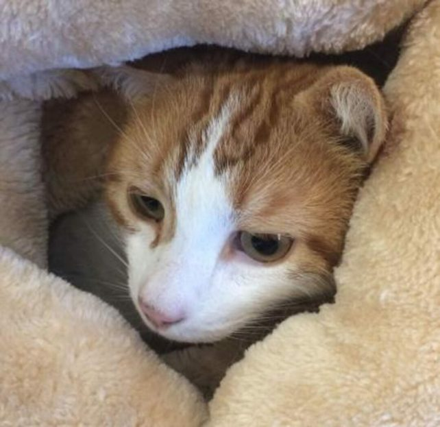Herrigan is a 6-year-old male