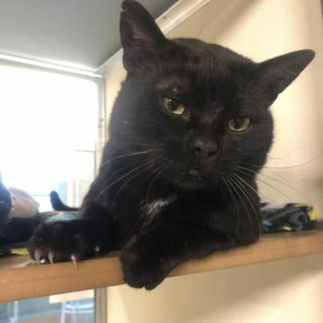 Junior is a 4-year-old male