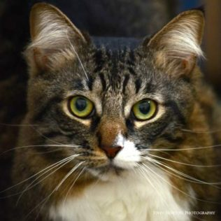 Noah is a 3-year-old male