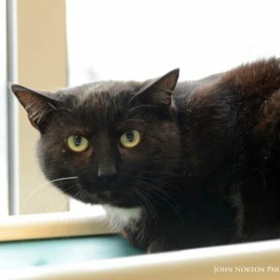 Ben is a 4-year-old male