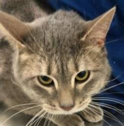 Zeus is a 3-year-old male