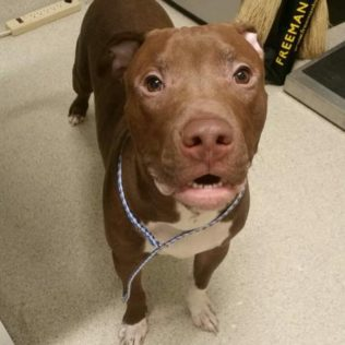 Andre is a 1-year-old male