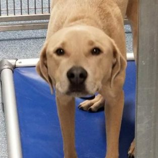 Duke is a 1-year-old male
