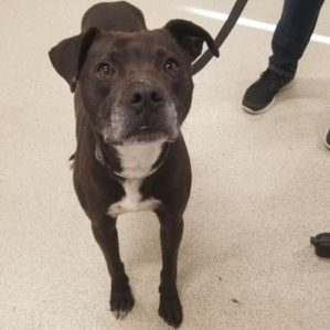 Simon is a 4-year-old male