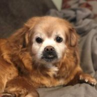 Rusty is a 14-year-old male