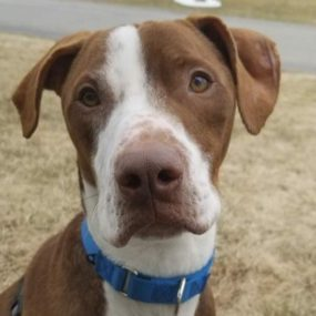 Winston is a 4-year-old male