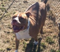 King Shamrock is a 4-year-old male