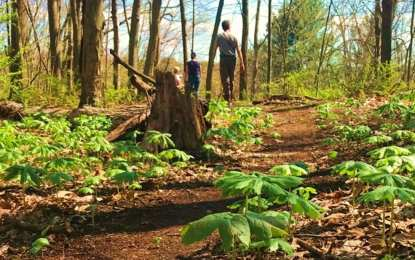 Bethlehem plans to have a new 147-acre park called Normans Kills Ravines