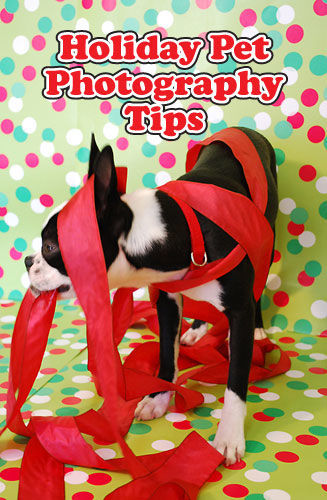 Holiday Pet Photography Tips: How to get gret shots for your holiday card! | spotofteadesigns.com