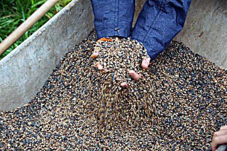 Das Saatgut für den Bienenhafen
