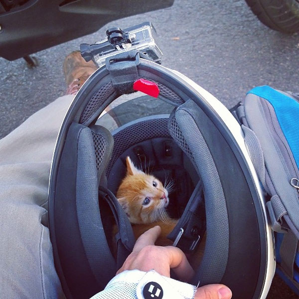 Dropped kitten on the road saved by woman on motorcycle; instantly adopted afterwards