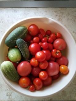 Zbiór warzyw 30 lipiec 2018 r