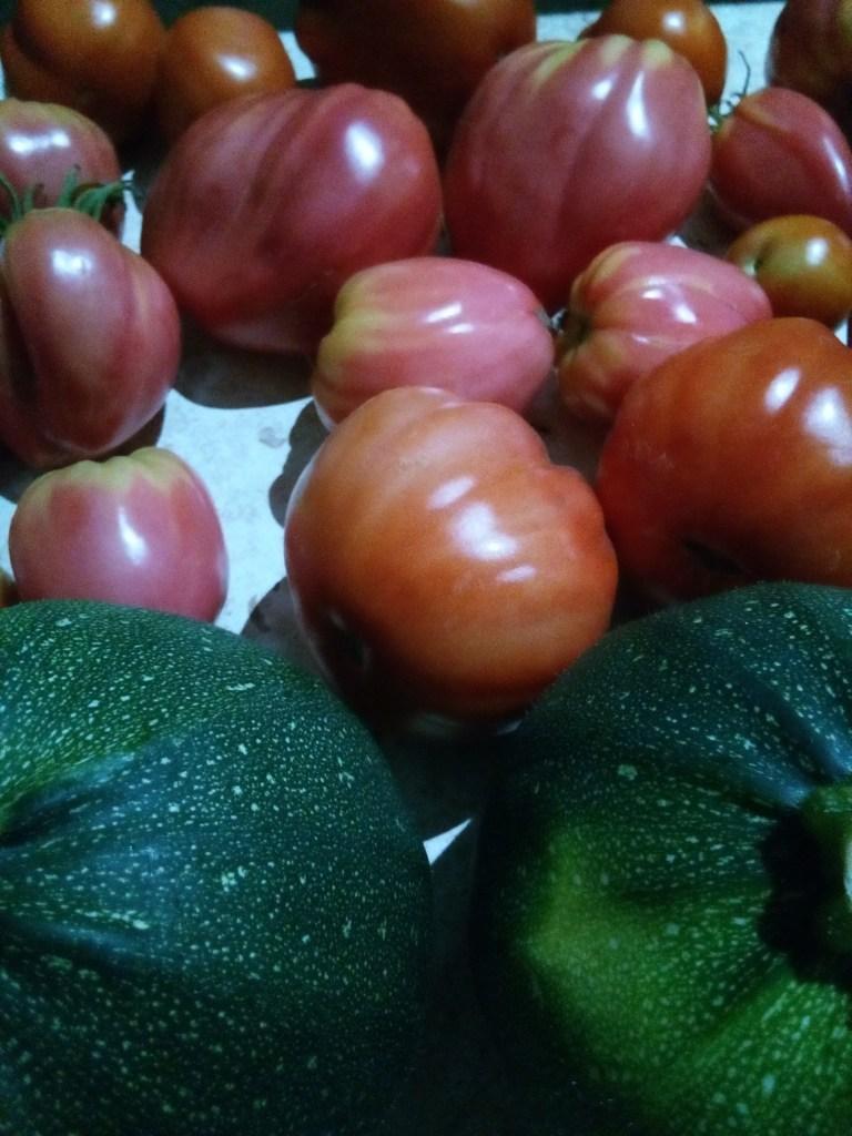 Pomidory i cukinie, 2019.08.08