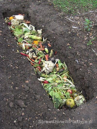 Odpadki zakopane w grządce