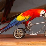 Kuwait Parrot Exposes An Affair Between Husband And Maid