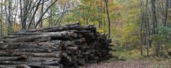 Auf dem Holzweg sein - © matthew_hull, morguefile.com