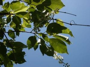 Auf keinen grünen Zweig kommen - © marykbaird, morguefile.com
