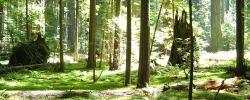 Durch die Lappen gehen - © emlyn, morguefile.com