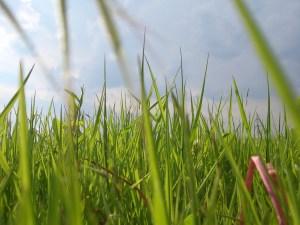 Ins Gras beißen - © luchian_alexandru, morguefile.com