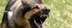 Jemandem die Zähne zeigen - © Wikimedia