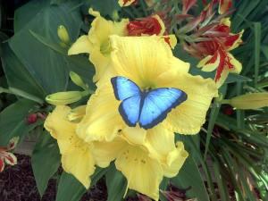 Schmetterlinge im Bauch haben - © juditu, morguefile.com
