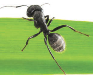 Image Field Ant 2