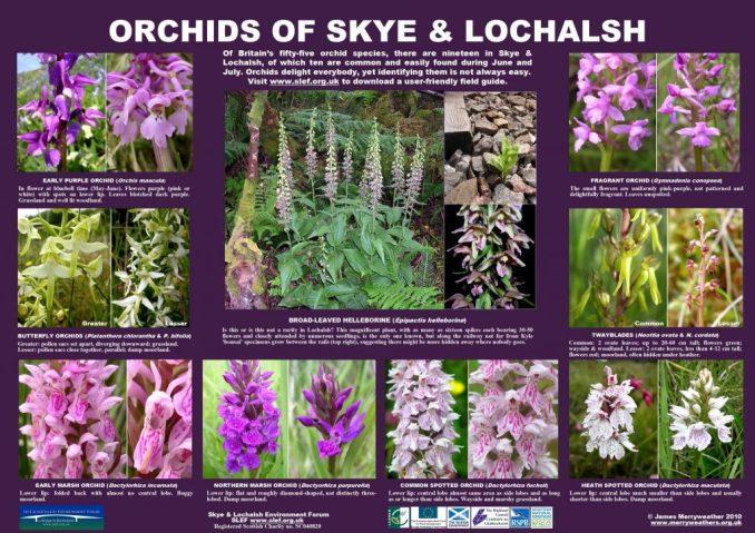 orchids-medium