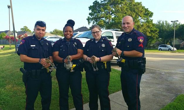 Precinct 4 Deputies Save Family Of Ducklings From Main Lanes Of The Toll Road