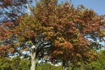 tree-with-red-and-green-leaves-during-fall_medium