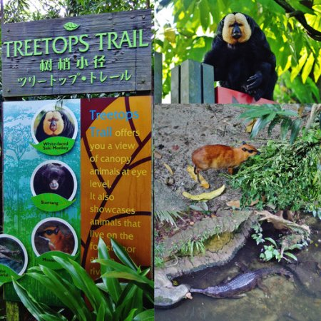 Singapore Zoo treetops trail