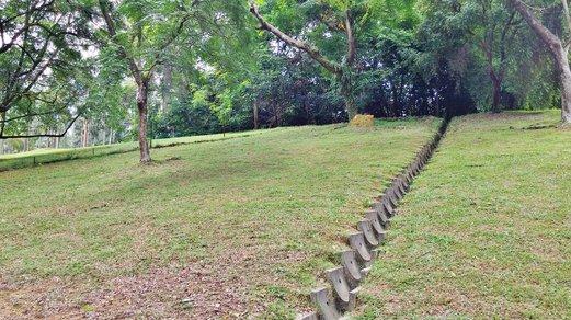 Saga Seeds Picking @ Ang Mo Kio Town Garden West