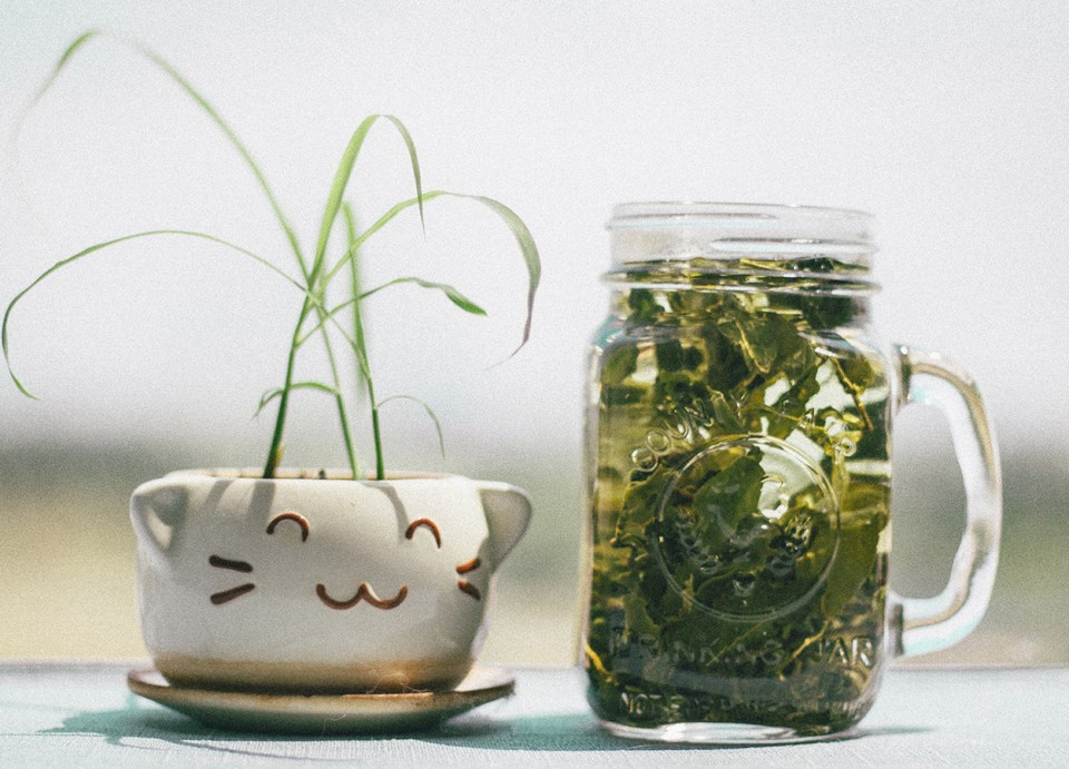 Superfood: Green Tea