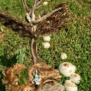 The Mottled Bark Fairy by Sprouted Dreams
