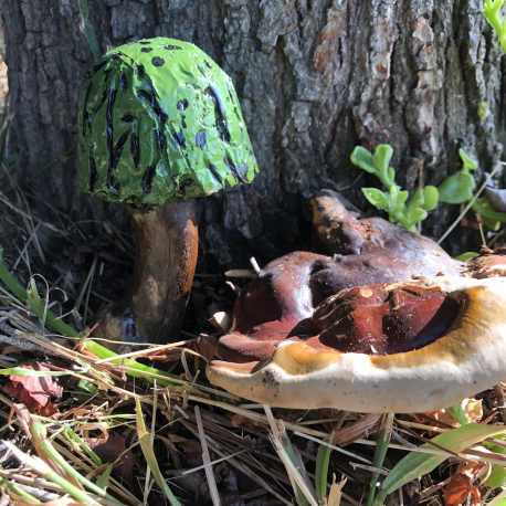 Green Mushroom in the Sprouted Outdoors Collection (4)