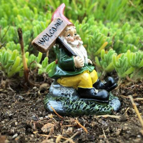 Welcome Gnome from Sprouted Dreams (7)