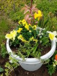 Spring Yellow Fairy Garden by Sprouted Dreams4