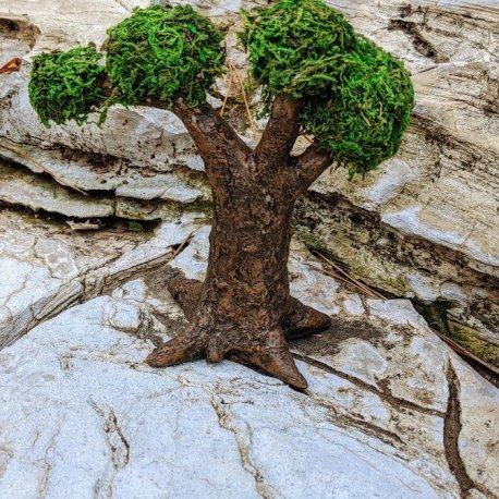 Gnome Tree back