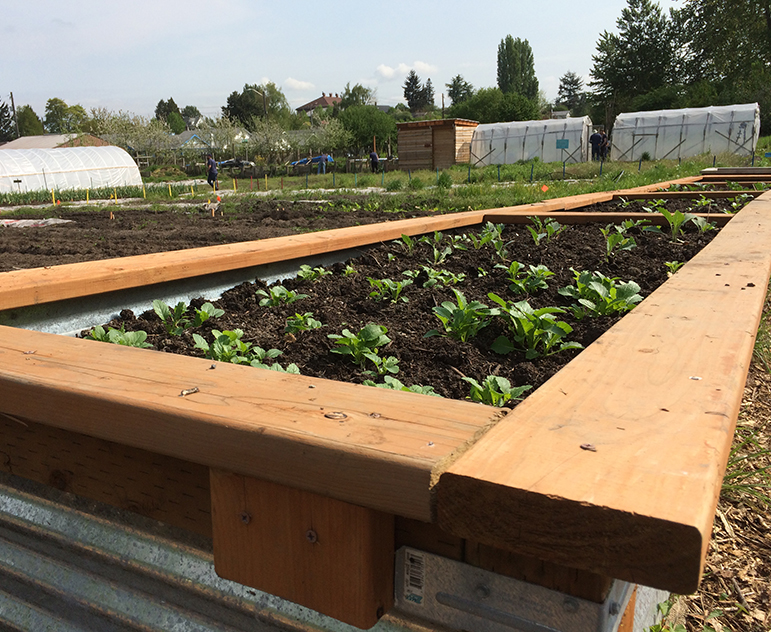 Beautiful raised garden beds for the South Park Seniors located at Marra Farm