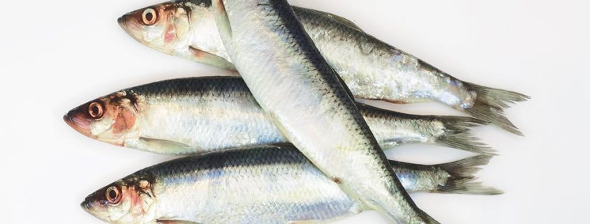 North Sea herring fishery draws to a close