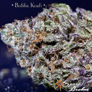 Bubba Kush - Cannabis Macro Photography by Spurs Broken (Robert R. Sanders)