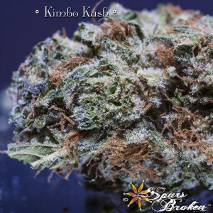 Kimbo Kush - Cannabis Macro Photography by Spurs Broken (Robert R. Sanders)