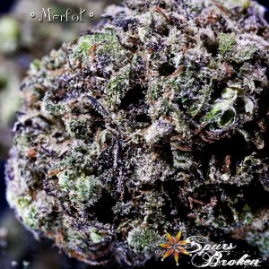 Merlot- Cannabis Macro Photography by Spurs Broken (Robert R. Sanders)