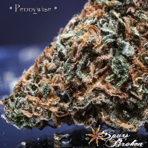 Pennywise - Cannabis Macro Photography by Spurs Broken (Robert R. Sanders)