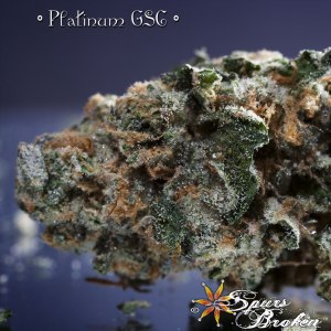 Platinum Girl Scout Cookies - Cannabis Macro Photography by Spurs Broken (Robert R. Sanders)