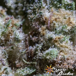 Purple Trainwreck - Cannabis Macro Photography by Spurs Broken (Robert R. Sanders)